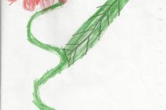 rajz (14)